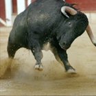 Bullfight Madrid